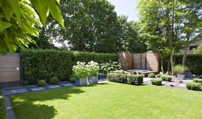 Tanie ogrodzenie domu z żywopłotu