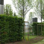 realizacje-nasadzenia-zywoplotu-z-graba-i-drzew-formowanych-3