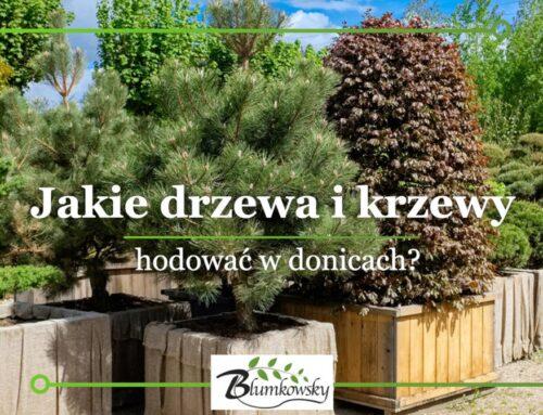 Drzewa i krzewy do donic? – Jakie gatunki posadzić w donicach